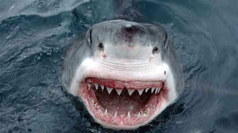 It's SA Marine Week, so here are our top 3 scariest shark